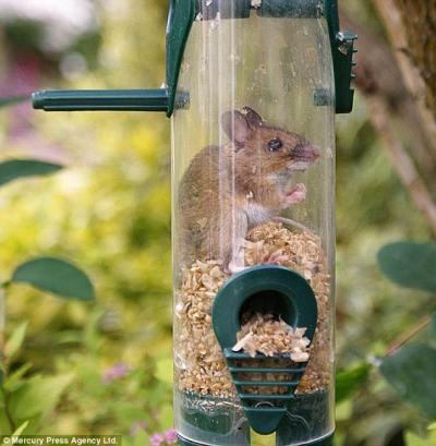 Как сделать прикольную кормушку для птиц