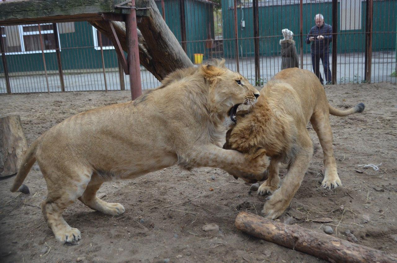 Фото © VK / Пермский зоопарк