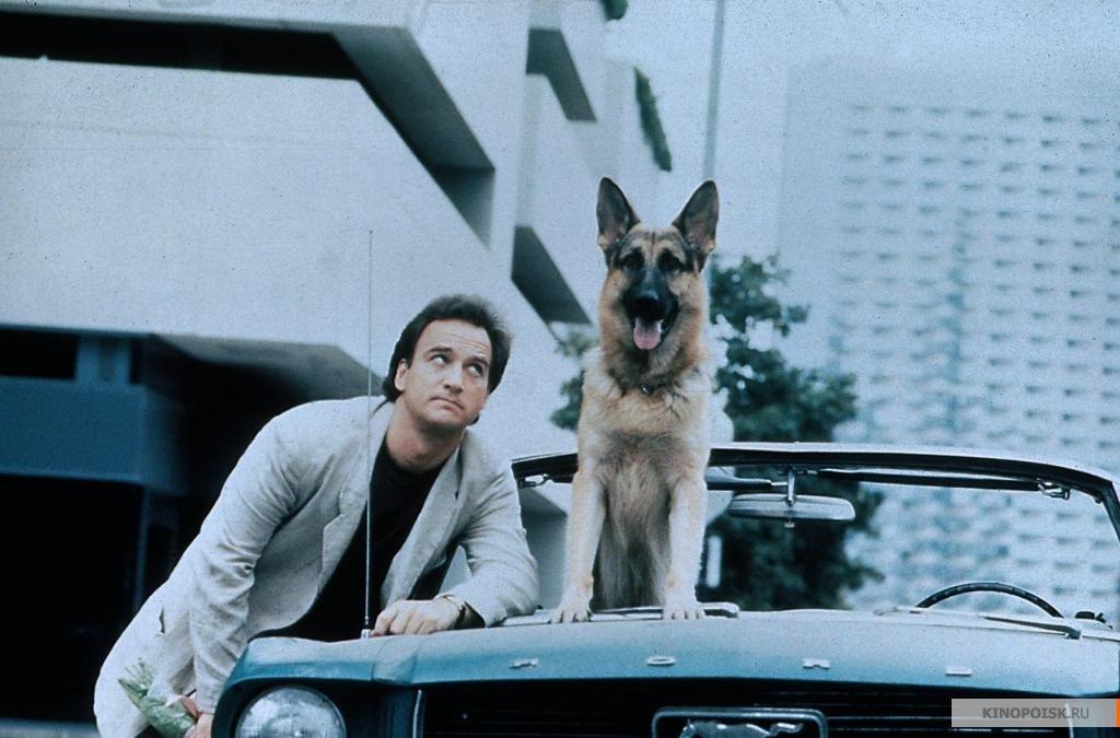 """Кадр из х/ф """"К9: собачья работа"""", 1989, реж. Р. Дэниел. Фото © """"Кинопоиск"""""""