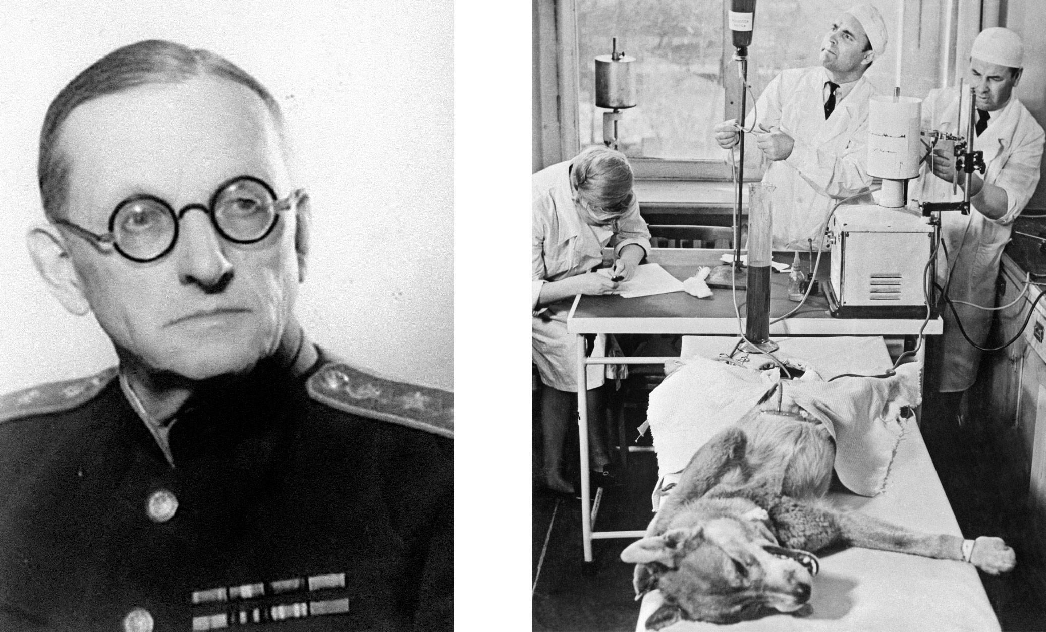 Владимир Николаевич Шамов. Фото © uzrf.ru Эксперименты по переливанию крови собакам. © Getty Images / Bettmann