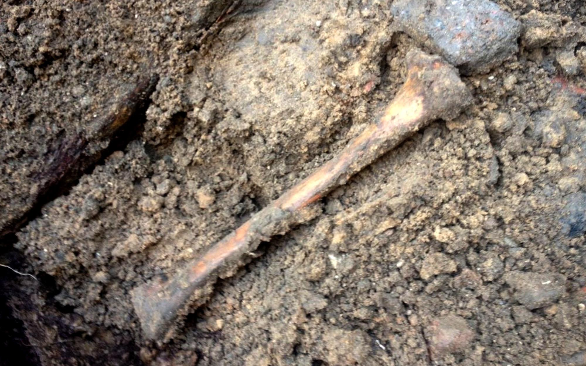Человеческие останки, обнаруженные на месте строительных работ. Фото:© L!FE / Сергей Карнаухов