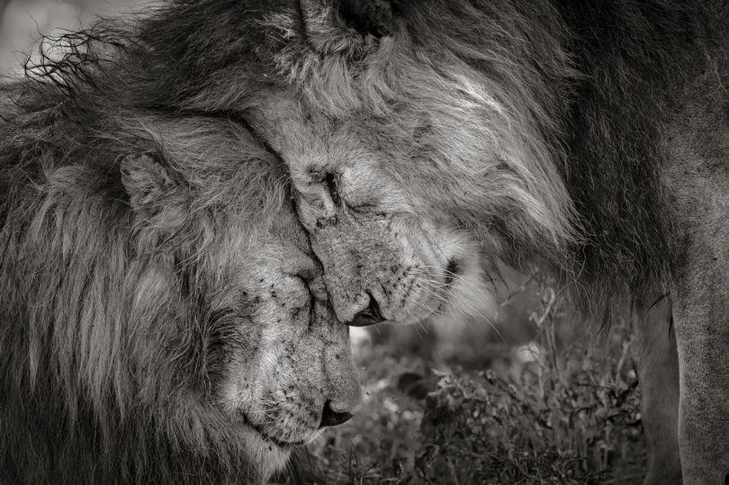 Фото: © Image: Wildlife Photographer of the Year/Natural History Museum/David Lloyd
