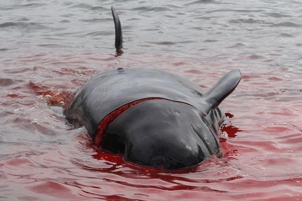 Фото © Sea Shepherd UK / Triangle News