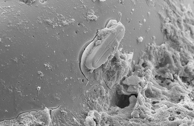 Снимок предоставлен Лабораторией радиационной биологии Объединённого института ядерных исследований