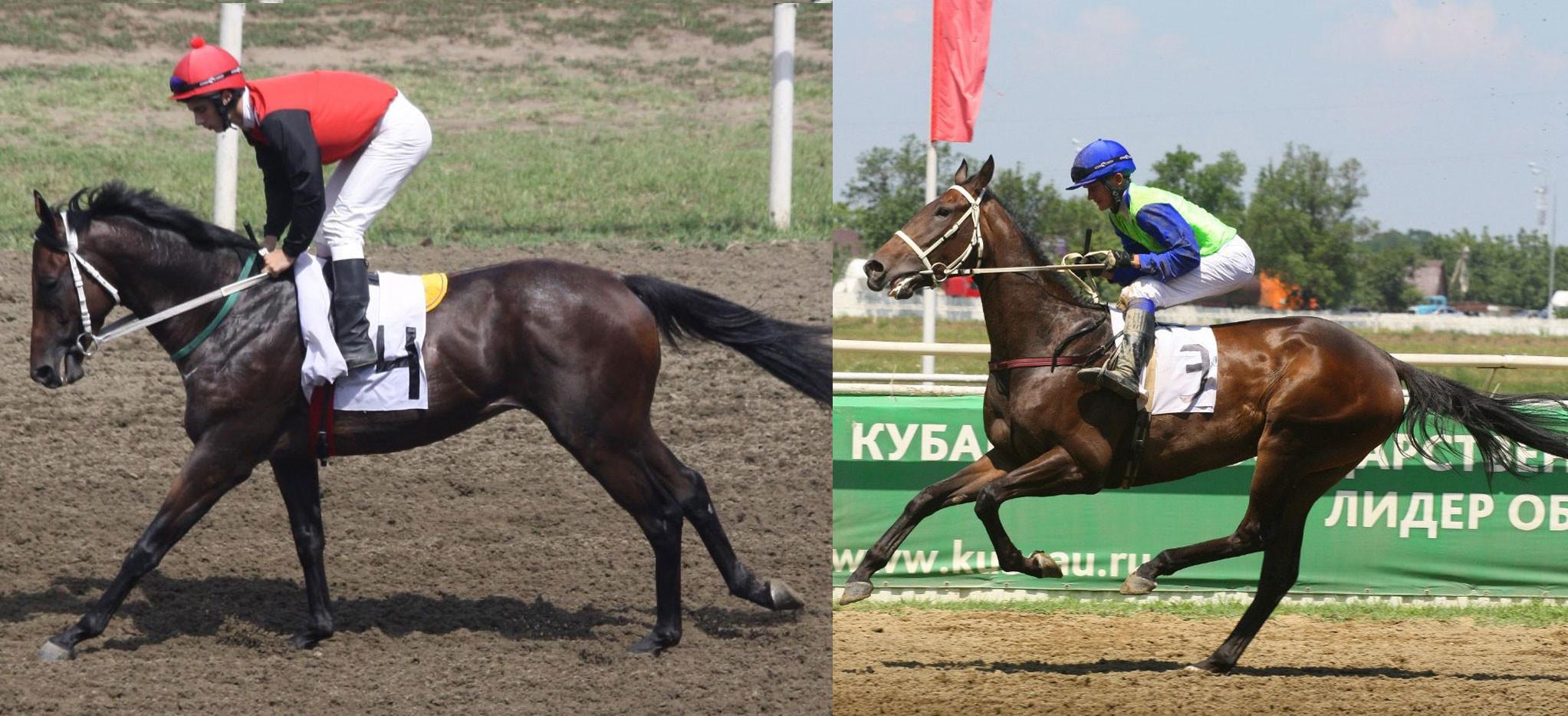 Классик (слева) и Мария Грация (справа). Фото © hippodrom.ru