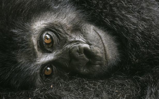 Фото: © Wildlife Photographer of the Year/Natural History Museum/David Lloyd
