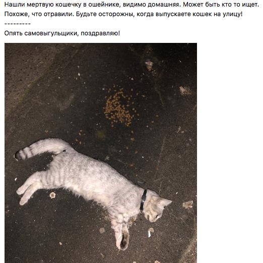 Скриншот © vk.com / Потерянные животные! г. Каменск-Уральский