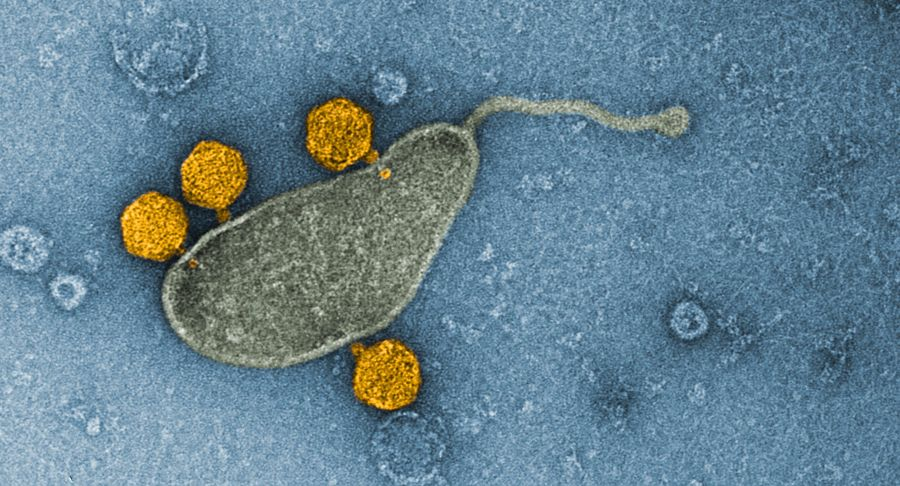 <p>Фото © Nature Microbiology</p>