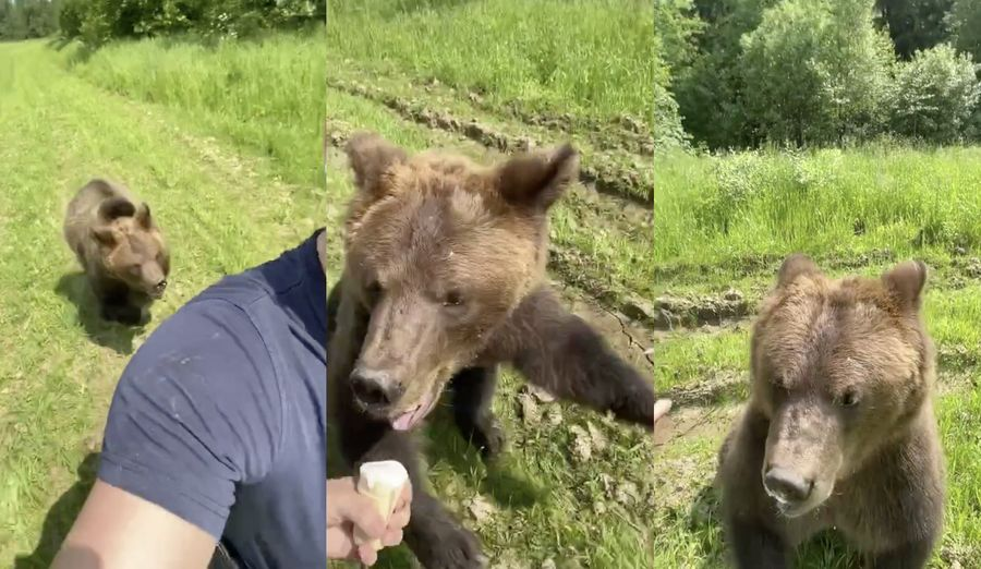 Кадры из видео © TikTok / bulldog.man
