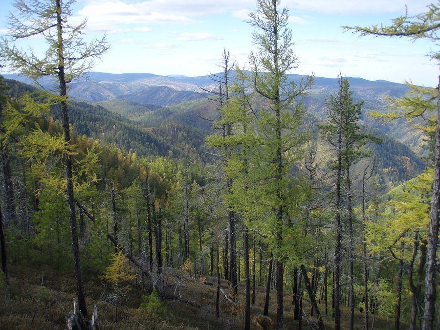"<p>Фото © <a href=""https://commons.wikimedia.org/wiki/File:Siberian_autumn_in_taiga..JPG?uselang=ru"" target=""_blank"" rel=""noopener noreferrer"">Wikipedia</a></p>"
