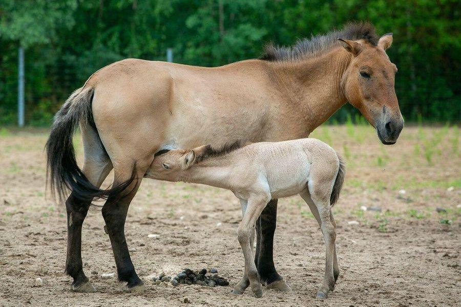 Фото © Московский зоопарк