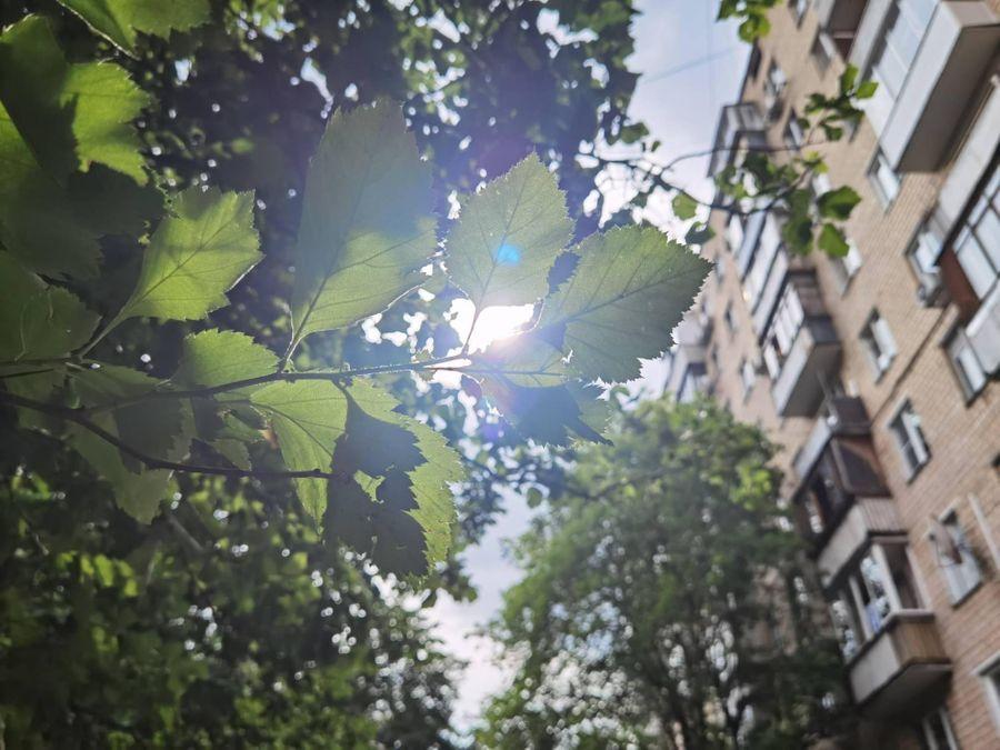 Основная камера. Обычный режим. Фото ©LIFE / Татьяна Руденко