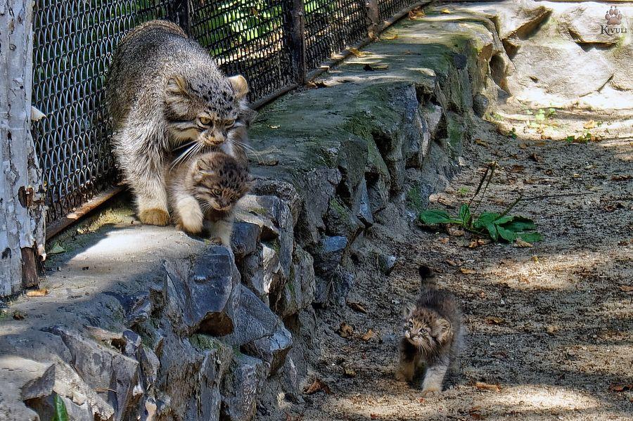 Фото © VK / Новосибирский зоопарк