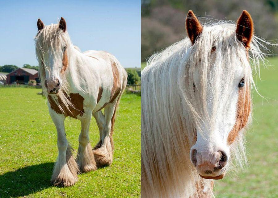 Фото © Facebook / here4horses