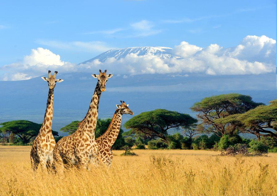 Гора Килиманджаро. Фото ©shutterstock