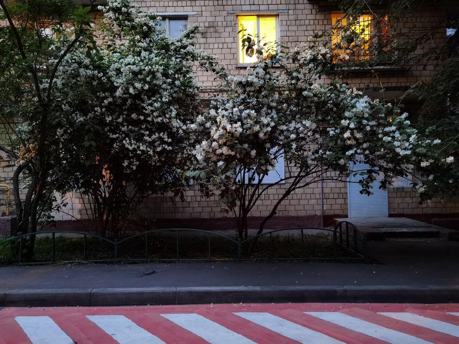 1x. Обычный режим. Фото ©LIFE / Татьяна Руденко