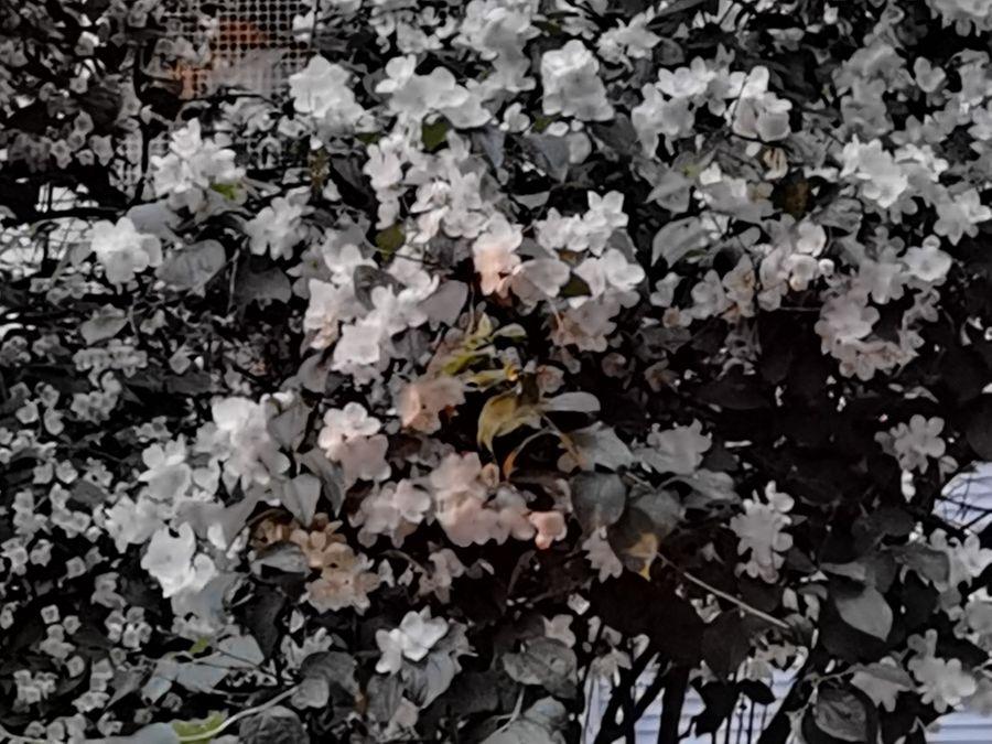 "5x. Режим ""Ночь"". Фото ©LIFE / Татьяна Руденко"