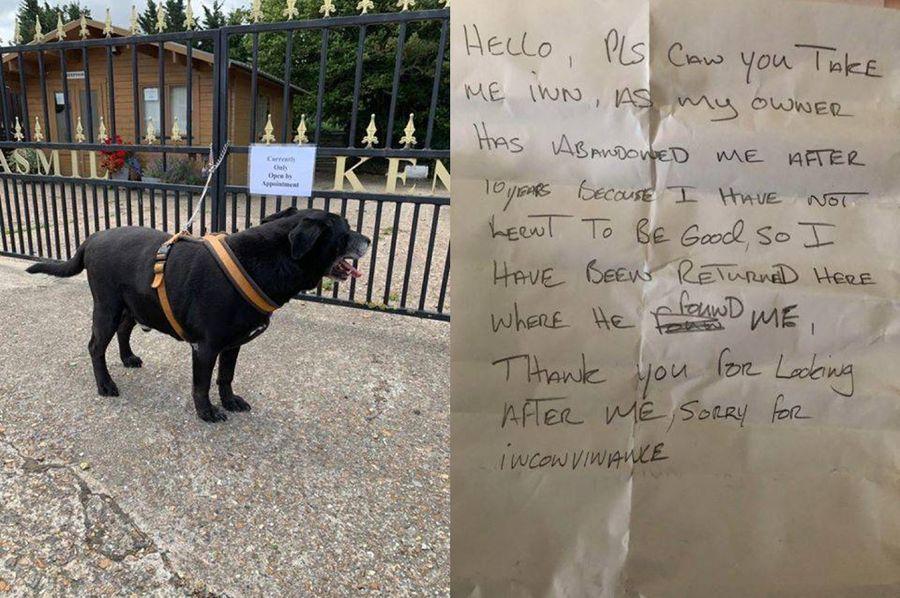Фото © Facebook / Swale Borough Council Stray Dog Service