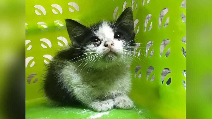 """<p>Фото © Instagram / <a href=""""https://www.instagram.com/tver_help_animals/"""" target=""""_blank"""" rel=""""noopener noreferrer"""">tver_help_animals</a></p>"""