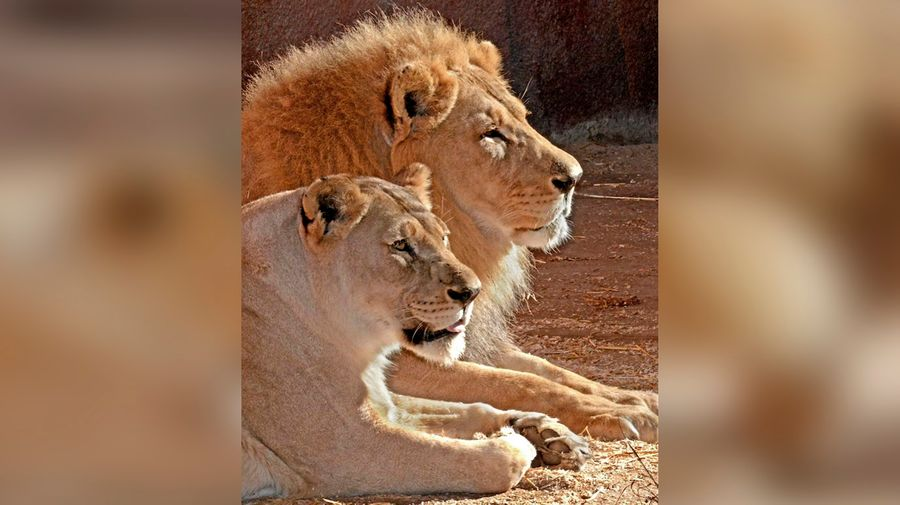 Фото © LA Zoo