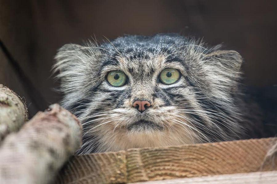 <p>Фото © Московский зоопарк / Анна Орлова</p>