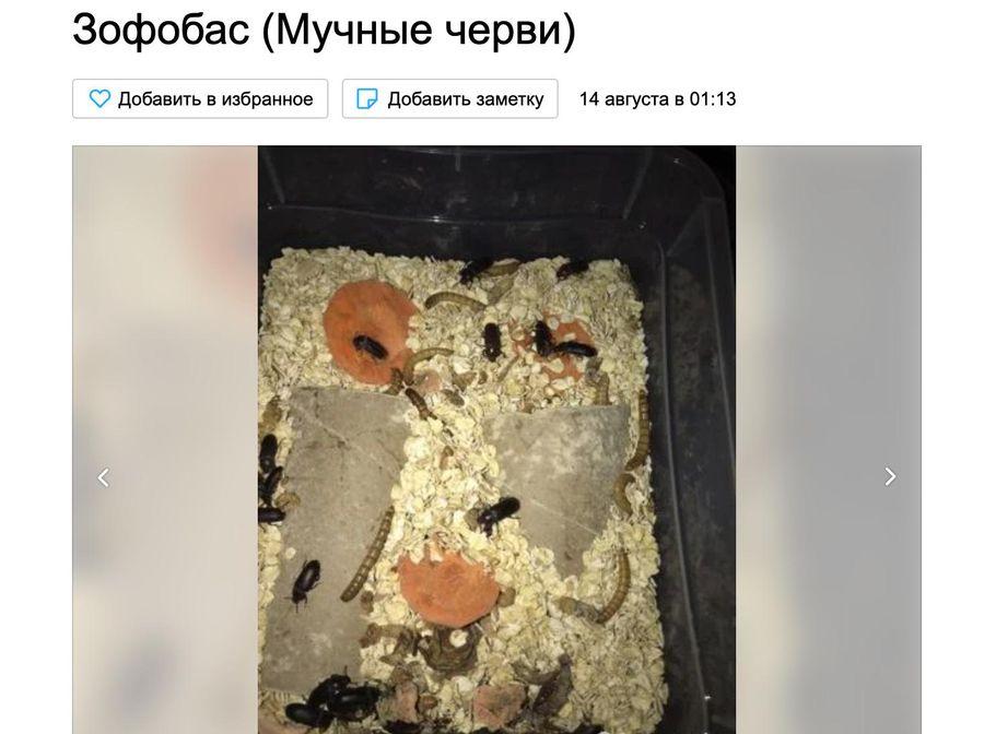 Фото © Avito.ru