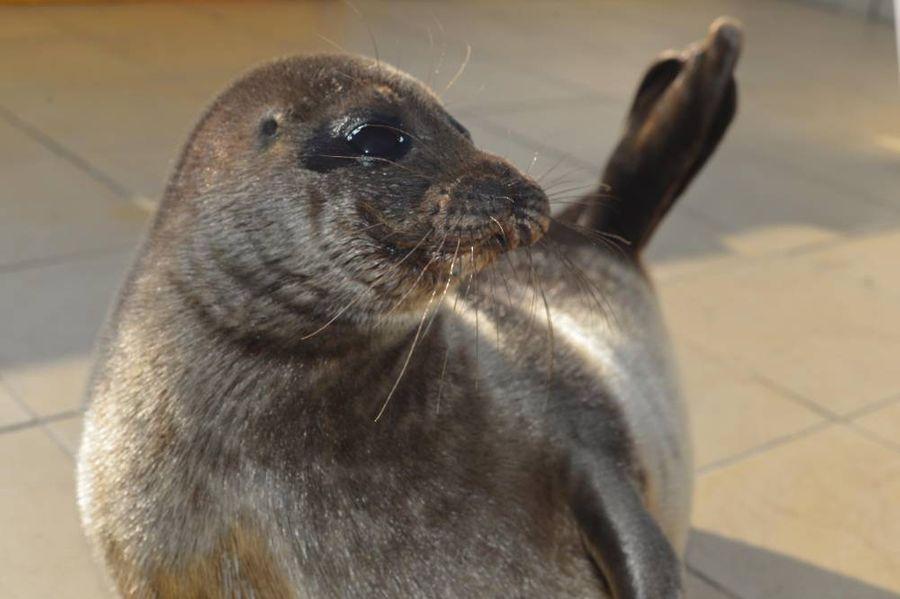 """<p>Фото © VK / <a href=""""https://vk.com/sealrescue"""" target=""""_blank"""" rel=""""noopener noreferrer"""">""""Спасение тюленей""""</a></p>"""