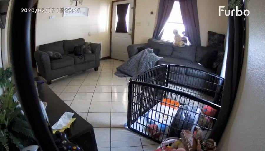 Кадр из видео © TikTok / ileensilva