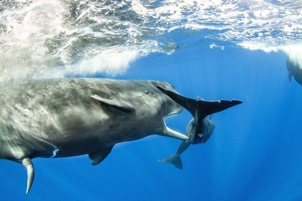 Фото: © Wildlife Photographer of the Year/Natural History Museum/Franco Banfi
