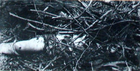 """Место в лесу у железнодорожной станции """"Аппаратная"""" на окраине Свердловска, где Винничевским был скрыт труп Лиды Суриной. Фото © Wikimedia Commons"""