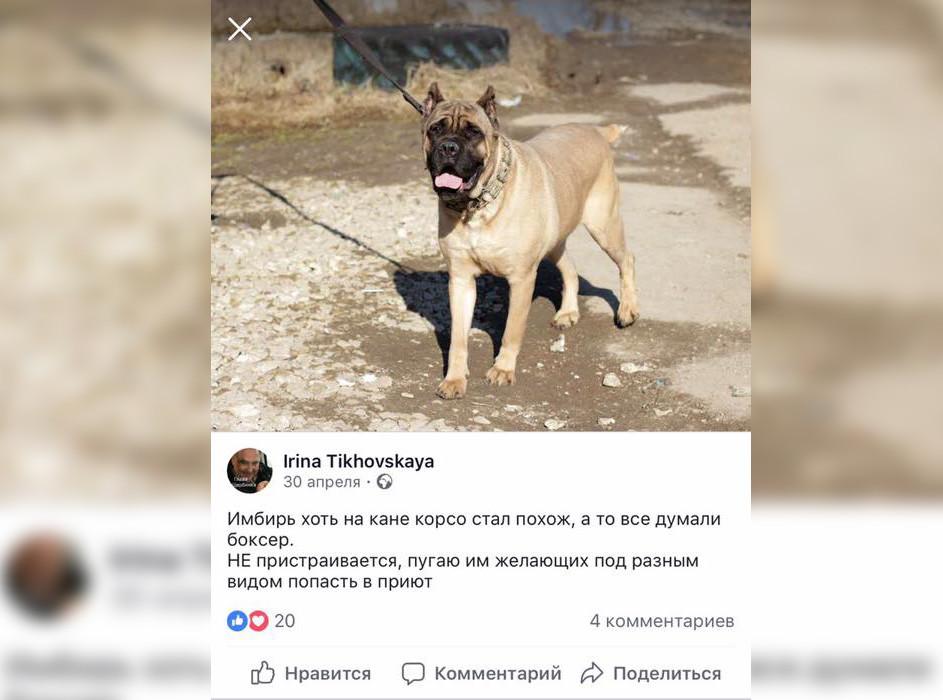Тиховская угрожает Имбирём и в соцсетях. Фото © Facebook / Belozerskaya Lidiya