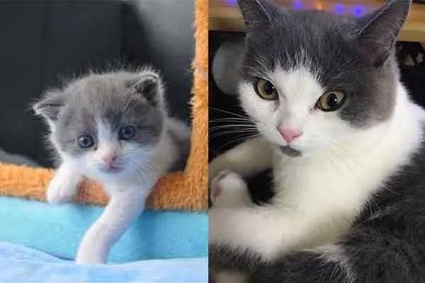 Оригинальный Чеснок (справа) и его клон
