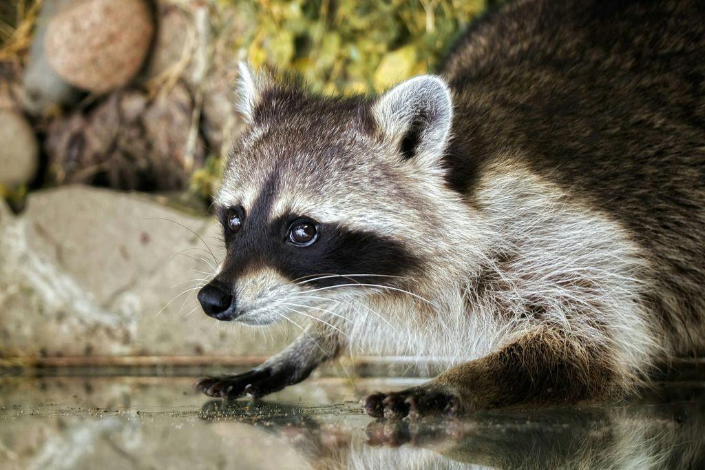 Фото: © Московский зоопарк