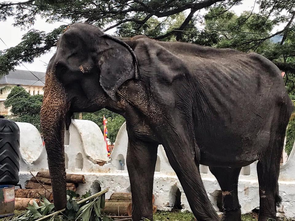 "Фото © ""Фейсбук"" / Save Elephant Foundation"