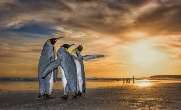 Фото: © Wildlife Photographer of the Year/Natural History Museum/Wim van den Heever