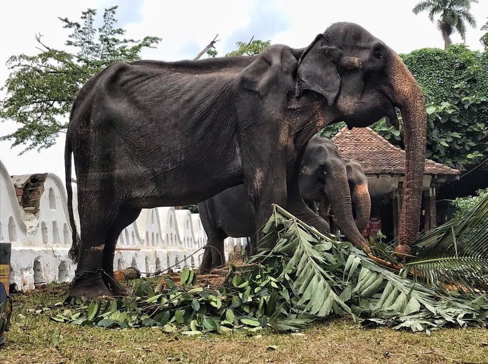 Фото © Facebook / Save Elephant Foundation