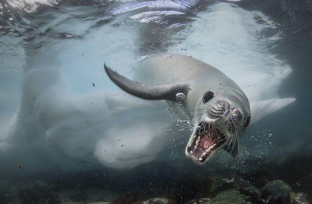 Фото: © Wildlife Photographer of the Year/Natural History Museum/Cristobal Serrano
