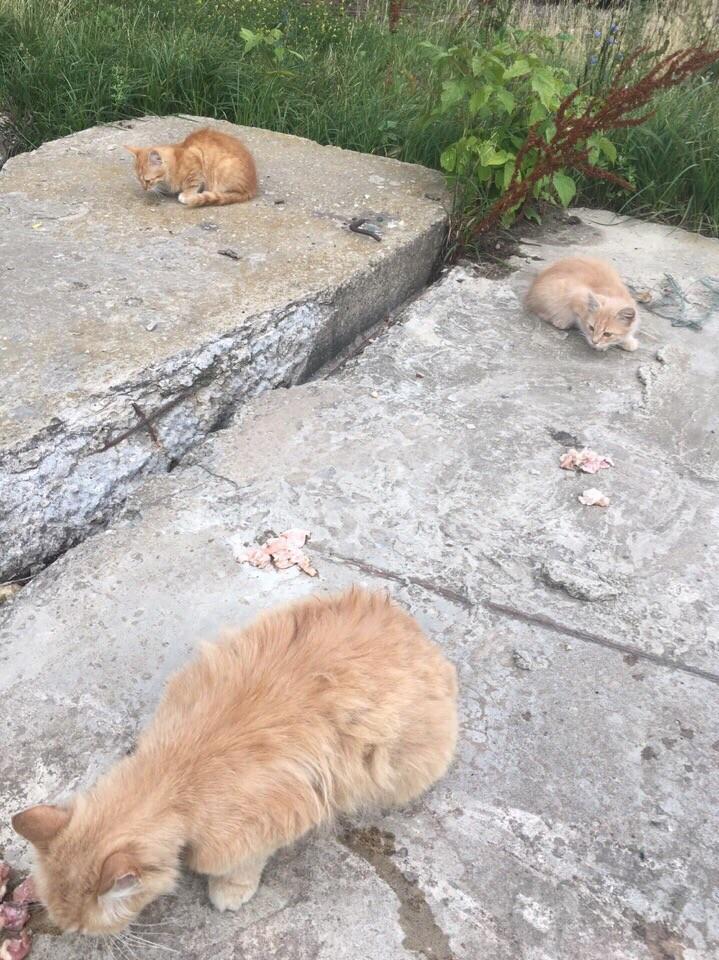 Фото © vk.com / Коты... Кошки... Котята... В добрые руки! МОСКВА