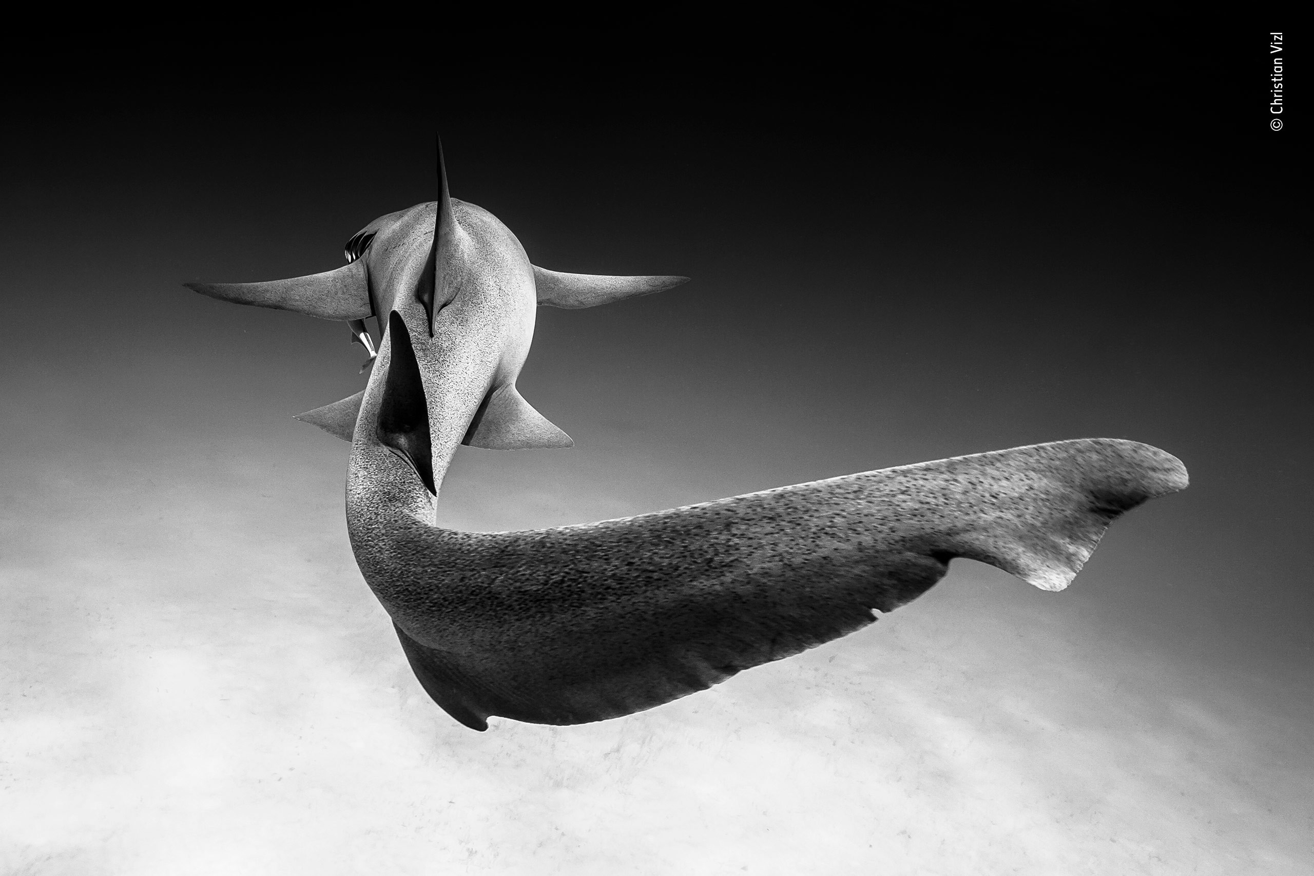 Фото: © Wildlife Photographer of the Year/Natural History Museum/Christian Vizl