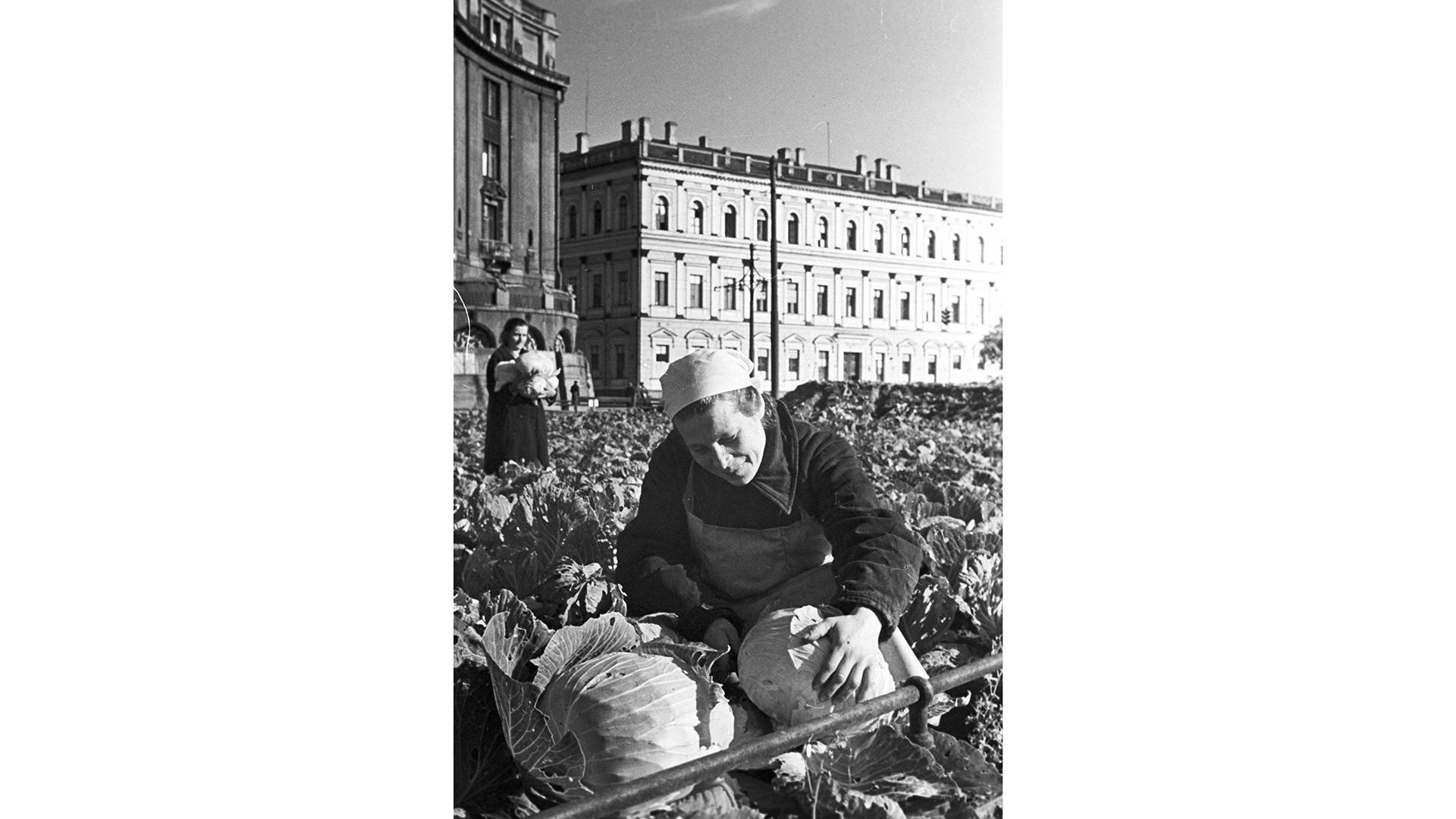 <p>Фото &copy; РИА Новости/Михаил Трахма</p>