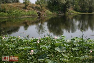 К озеру цветов ходят все местные жители
