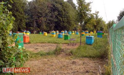 Пчелки Юрия Михайловича живут в прекрасных условиях