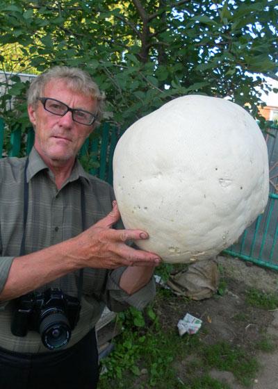 лишено этого грибы в нижегородской области 2016 форум шерстью