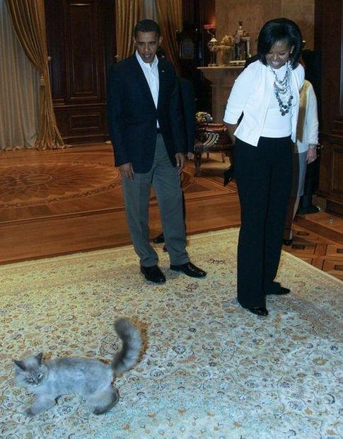 Кот Дорофей, Барак и Мишель Обама