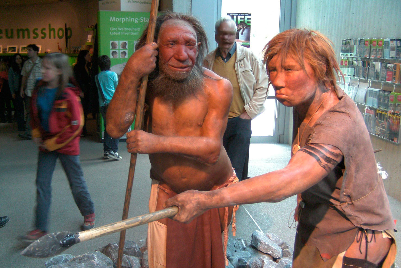 "<p>Фото: &copy;&nbsp;<a href=""https://ru.wikipedia.org/wiki/%D0%9D%D0%B5%D0%B0%D0%BD%D0%B4%D0%B5%D1%80%D1%82%D0%B0%D0%BB%D0%B5%D1%86#/media/File:Neandertala_homo,_modelo_en_Neand-muzeo.JPG"" target=""_blank"">wikipedia.org/UNiesert</a></p>"
