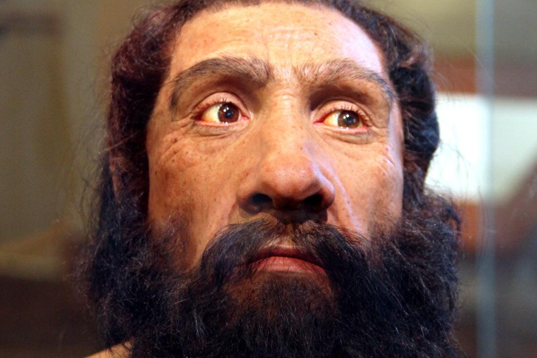 "<p>Фото: &copy;&nbsp;<a href=""https://ru.wikipedia.org/wiki/%D0%9D%D0%B5%D0%B0%D0%BD%D0%B4%D0%B5%D1%80%D1%82%D0%B0%D0%BB%D0%B5%D1%86#/media/File:Homo_neanderthalensis_adult_male_-_head_model_-_Smithsonian_Museum_of_Natural_History_-_2012-05-17.jpg"" target=""_blank"">wikipedia.org</a></p>"