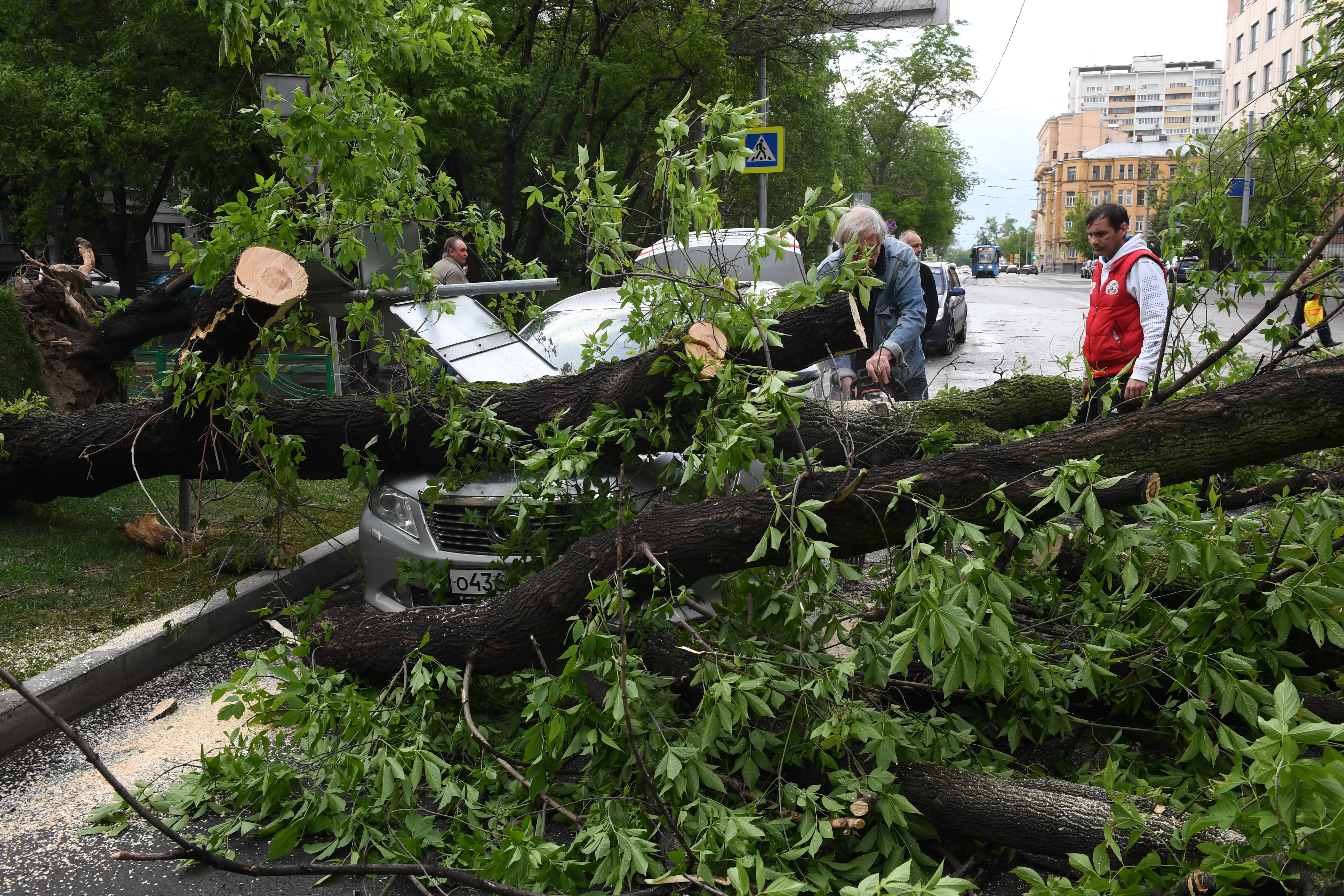разрабатывались для ураган в москве пострадавшие фото того, как определились