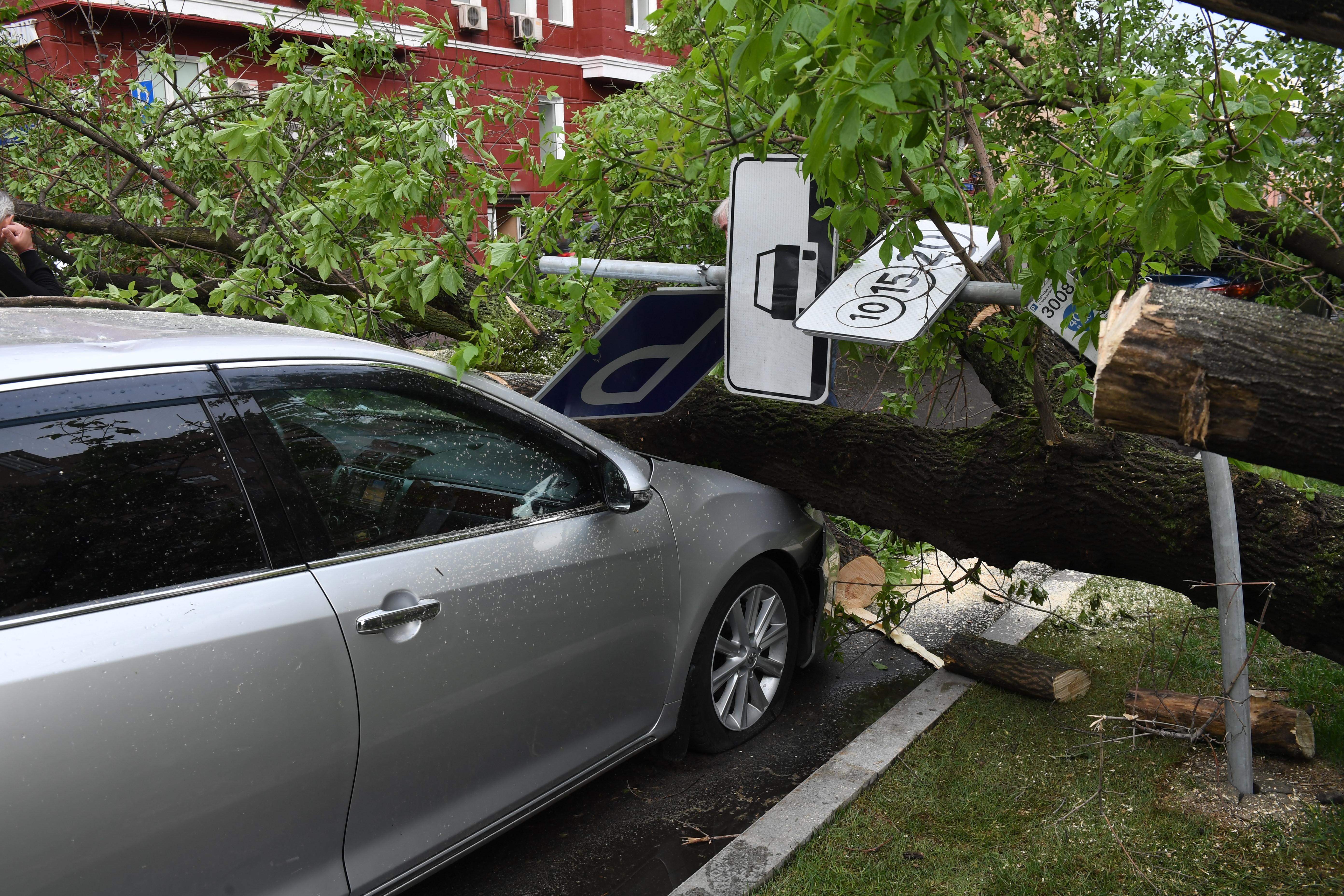 <p>Последствия урагана, пронесшегося 29 мая в Москве. Фото:<span>&copy; РИА Новости/Илья Питалев</span></p>