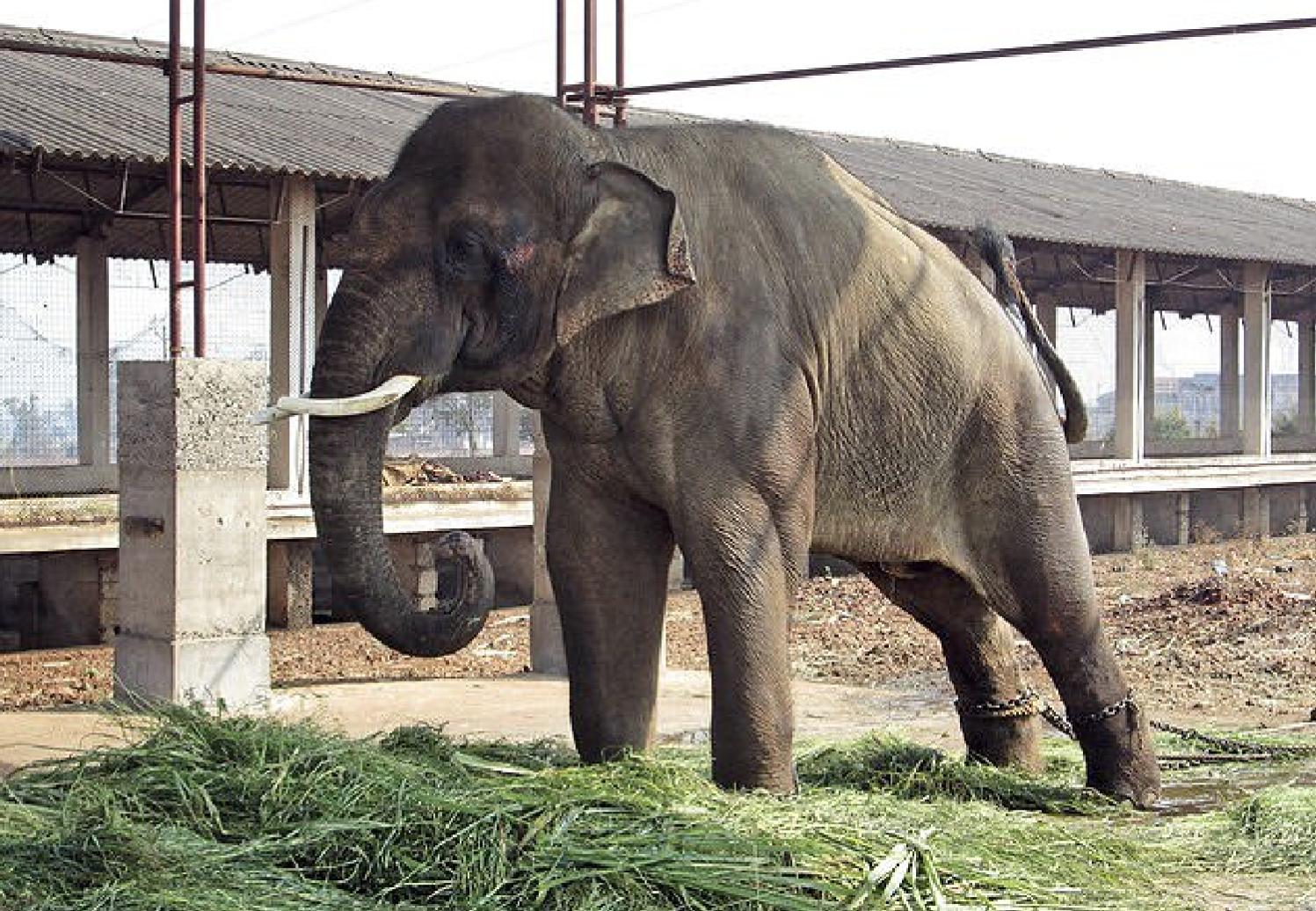 Слон Сандер. Фото: ©Daily Mail