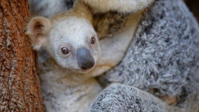 Фото: © Зоопарк Квинсленда